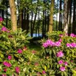 rezerwat przyrody, rodoendrony Wielkopolska, Lubuskie, wędkarstwo, agroturystyka ekologiczna